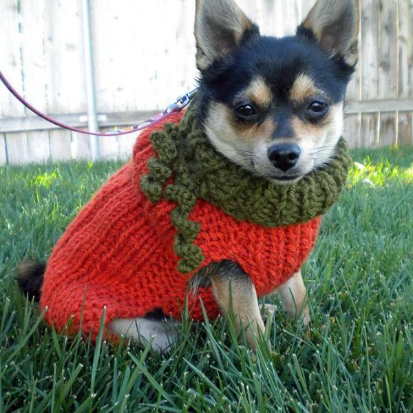 Lil Pumpkin Dog Sweater Knitting Pattern